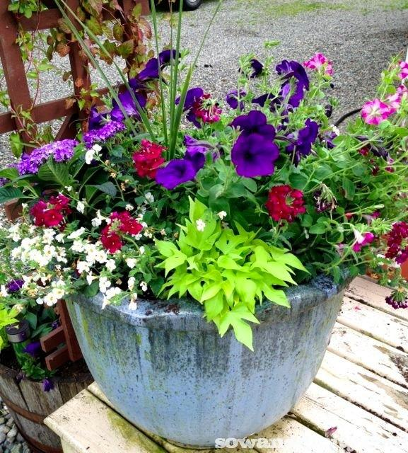 Container Gardening Ideas For Summer: Early Summer Flowers