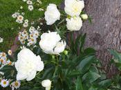 Garden Bloomin'