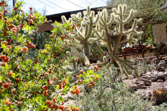 Tucson Botanical Gardens Hours Tucson Botanical Gardens Az Top Tips Before You Go Tripadvisor