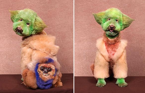 Enter the Unusual World of EXTREME DOG Grooming!