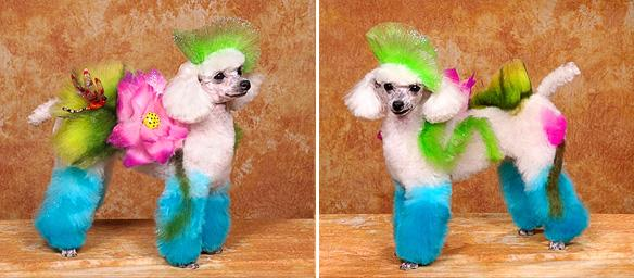 Dog Grooming Hershey Pa