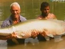 Arapaima, World's Largest Freshwater Fish