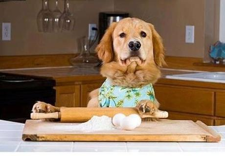 dog bake