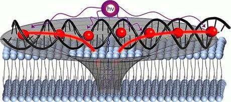 DNA Structure As Model For Artificial Light Collecting Antenna System