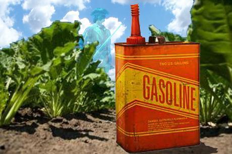 GMO Crops Torched in America