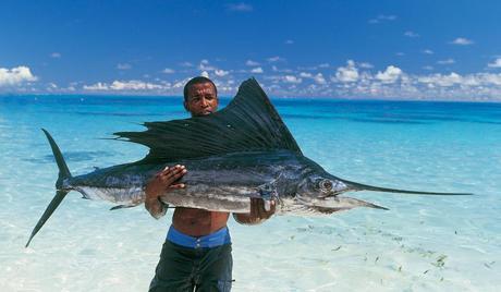 http://www.lussotravel.com/uploads/country/Seychelles-6.jpg