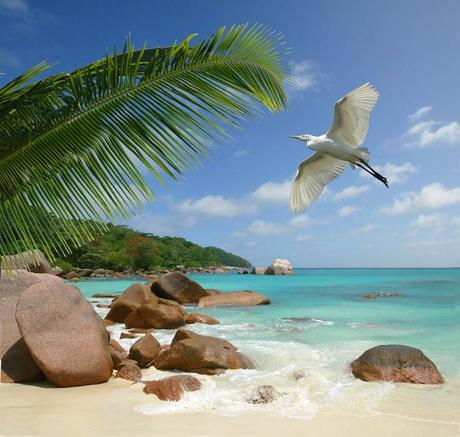 20 photos of sweet Seychelles