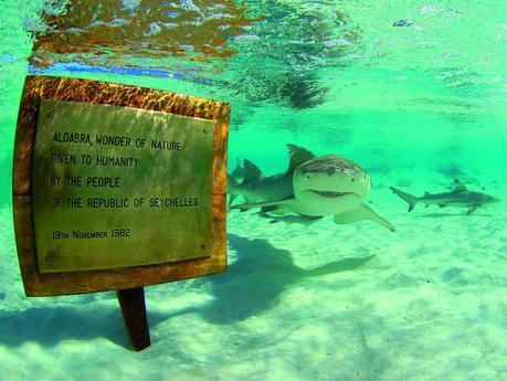 http://www.geo.fr/var/geo/storage/images/environnement/actualite-durable/aldabra-atoll-de-la-biodiversite/au-large-des-seychelles-un-tresor-de-biodiversite/279437-1-fre-FR/au-large-des-seychelles-un-tresor-de-biodiversite.jpg