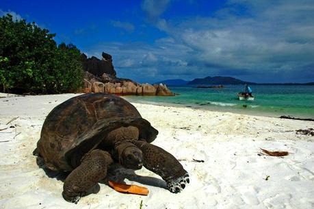 http://www.holidaysbox.com/wp-content/uploads/2012/07/Seychelles-tortoise.jpg