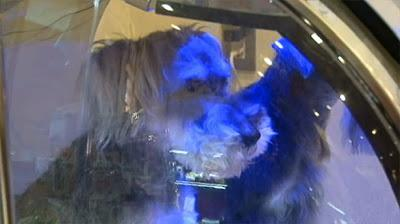 Japan Unveils the DOG Spa of the Future!