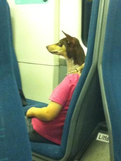 (This is not a dog politely riding the train to work.)