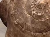 Giant Bronze Seashells Sculptures Marc Quinn