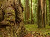 Trees Spooky Woods