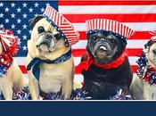 VIDEO: Pugs Parade Patriotic July Float!