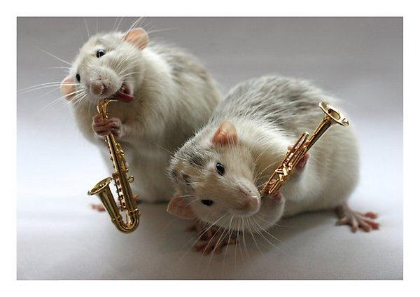 Rats Never Looked This Adorable Musical Logo Images Cutest