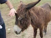 Donkey Cheese from Zasavica Nature Park Serbia