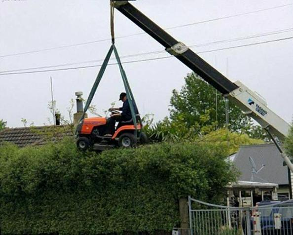 mowing the hedges