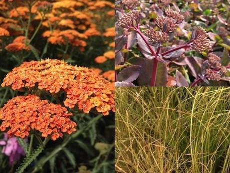 Achillea 'Terracotta', Sedum 'Matrona' and Carex testacea