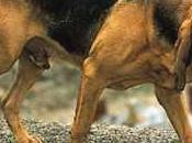 Breed Spotlight: Bloodhound