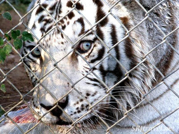 Keepers of the Wild Animal Rescue Sanctuary, Kingman ...