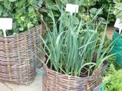 Basketweave Planters