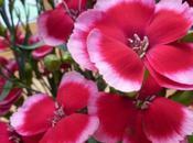 Fragrance-Free Pink