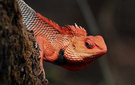 The 20 Most Colorful Lizards On Earth