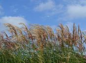 Prairie Garden Sussex Downs
