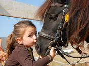 What Does Horse Need? Guide Your First Pony