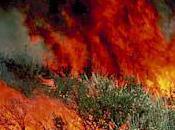 Ultrarunners Seriously Injured Australian Brushfire