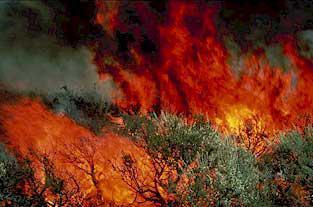 Ultrarunners Seriously Injured In Australian Brushfire