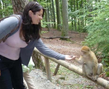 Feeding a Barbary macaque at Monkey Mountain (Affenberg)