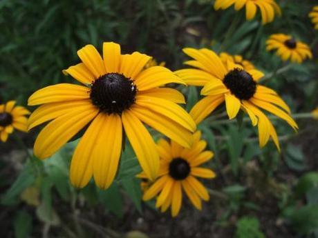 Garden Bloggers Bloomday – 15 Sept 2011