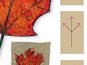 Draw Maple Leaf