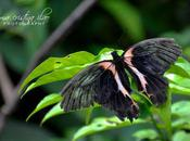 Bohol Butterfly Sanctuary: Protecting Nature's Little Wonders