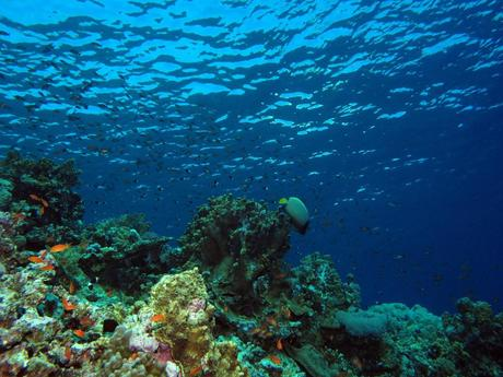 ... writing Discoveries of the Census of Marine Life | fifteeneightyfour