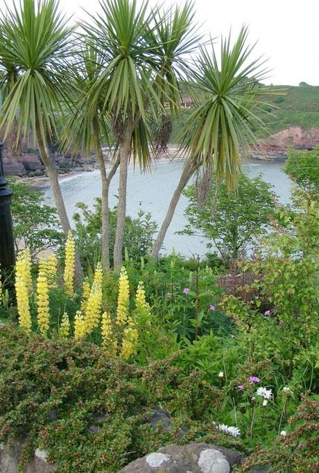 palm trees growing in  dunmore east in county waterford - ireland
