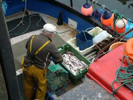 fisherman prepares lobster trap in dunmore east harbor in county waterford - ireland