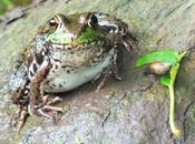 Green Frog River Seaton Hiking Trail Ontario