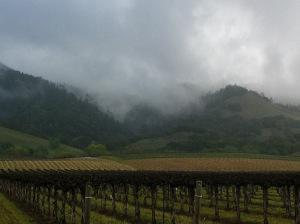 Sonoma - Early Morning