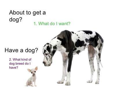 dog questions