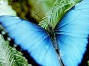Butterfly Book Club Facebook