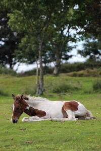 Foal, Colliford Lake (photo: Amanda Scott)