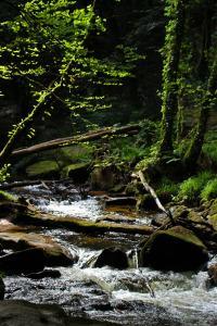 The River Fowey as it passes through Golitha Falls