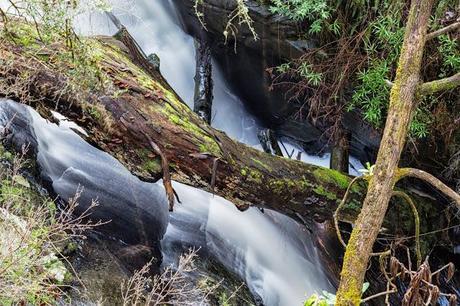 fallen tree trunk below won wondah falls