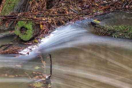 water around tree stump henderson creek