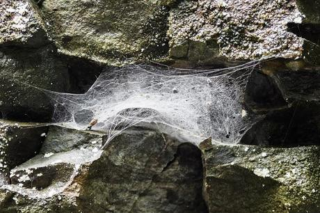 spider web in rock wall