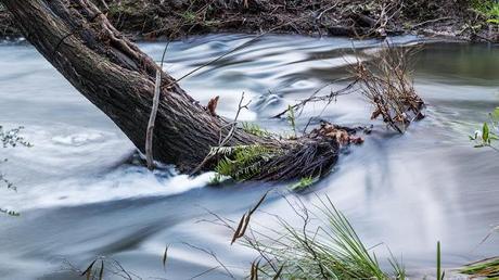 tree in water of henderson creek lorne