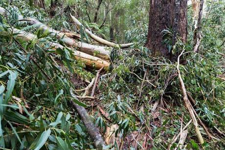 fallen tree across walking track
