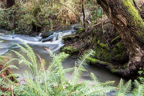 henderson creek lorne